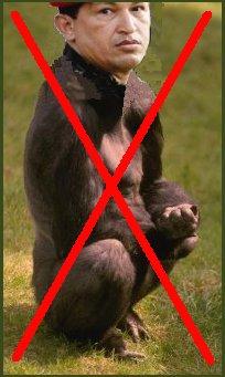 gorila no
