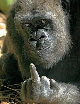 https://plazamoyua.files.wordpress.com/2009/06/gorila_fuck_you.jpg?w=309&h=400