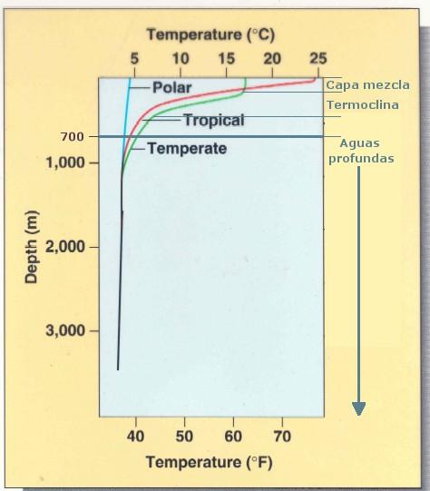 Figura 3 (Termoclina)