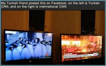 pinguinos-en-turquia