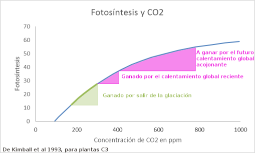 fotosintesis-y-co2-2