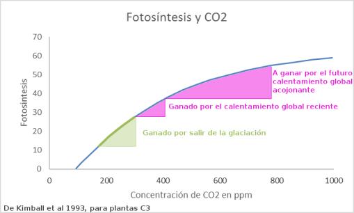 fotosintesis-y-co2-2