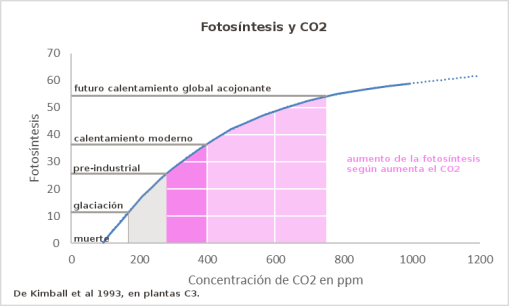 fotosintesis-y-co2