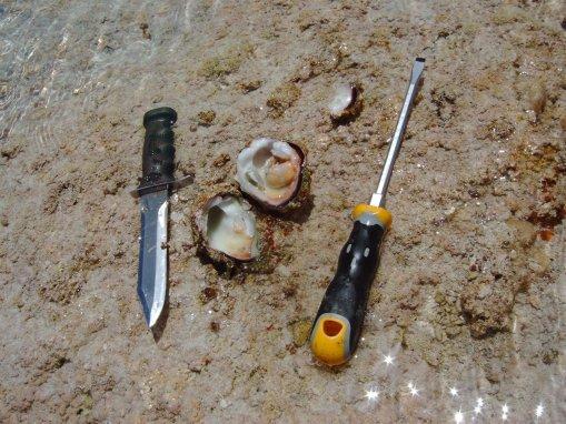 arrecife-minerva-ostras