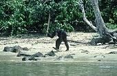 chimpa-descubre-chalaparta