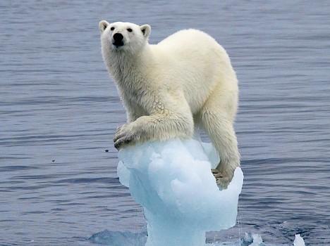 oso-polar-colgado
