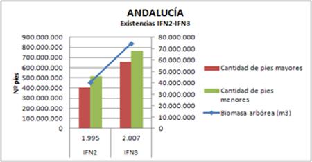 ceratonia-bosque-andalucia-2