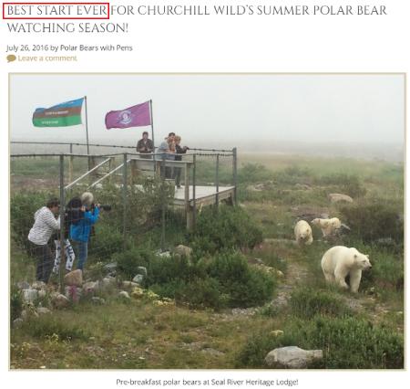 churchill-osos-polares-2016-a-tope