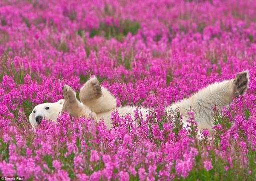 oso-florido