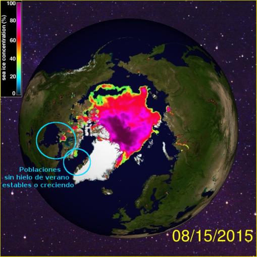 osos-artico-hielo-agosto