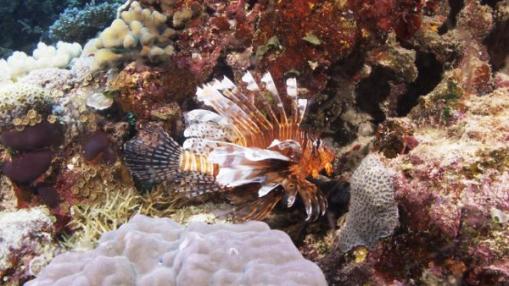 el-coral-esta-vivo