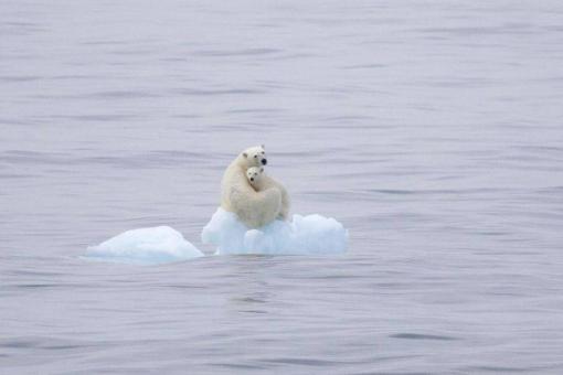 osos-polares-desapareceran