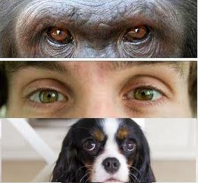 esclera-humanos-perros