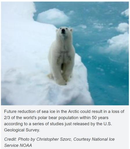 declive-osos-polares-prediccion