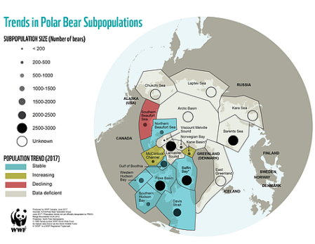 polar_bear_populations_2017_06_603172