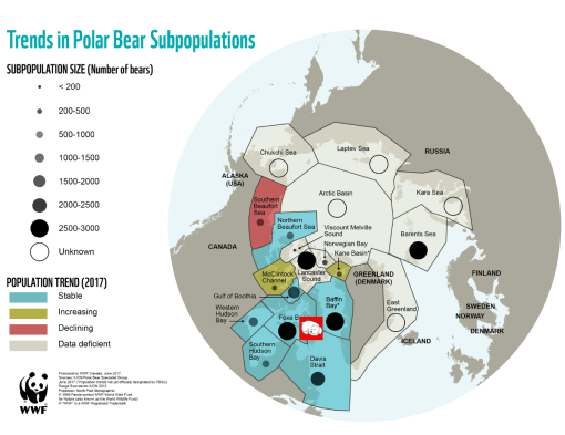 oso-polar-moribundo-wwf