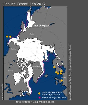 osos-polares-holoceno-y-anteriores